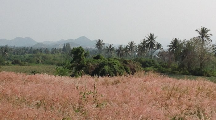 Pranburi Land for Sale near Banyan Golf Course
