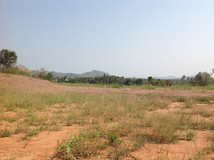 [:en]Pranburi land for sale for development or resort[:th]Land for sale for development or resort[:de]Land for sale for development or resort[:]
