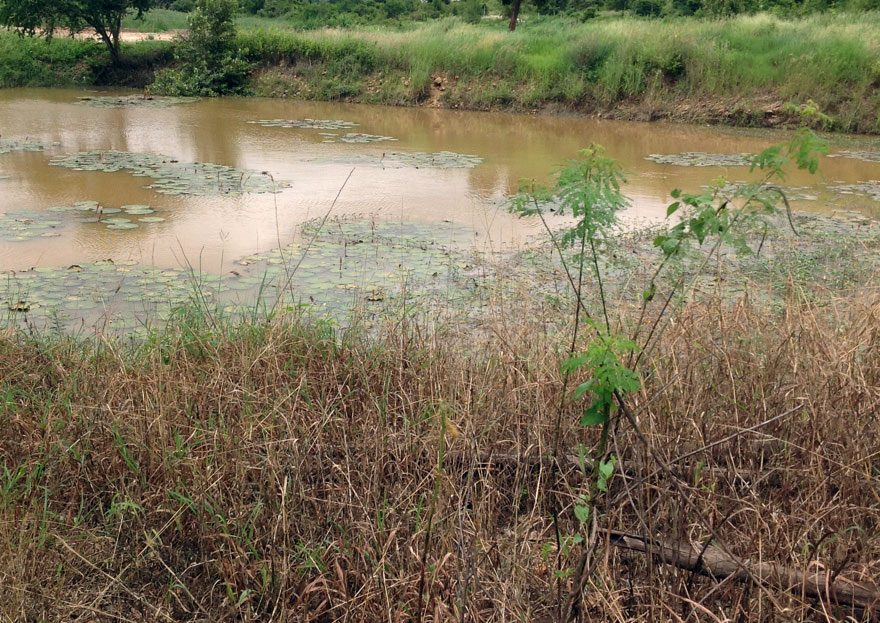 Large Land for Sale in Pranburi