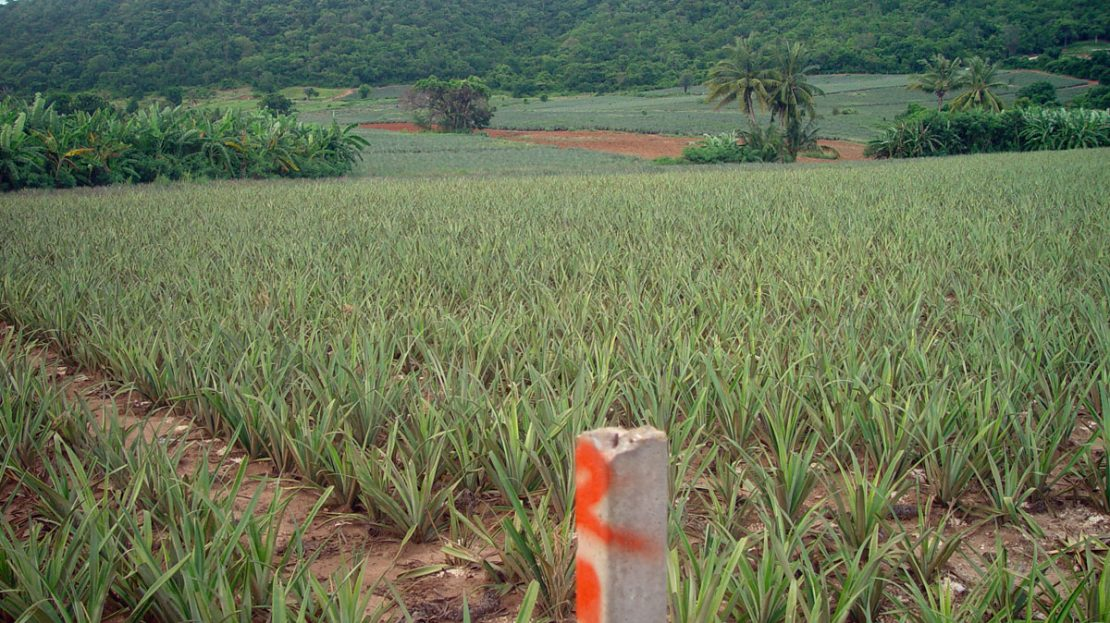 Land for sale in Pranburi Wang Pong area
